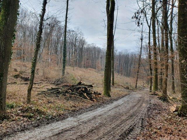 Redovni radovi na obnovi šume u sjevernom dijelu parka Maksimir
