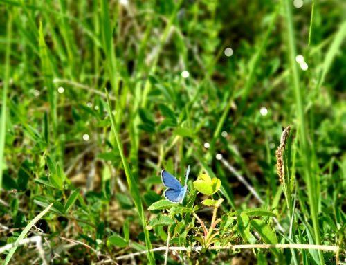 Znate li da se 21. i 22. svibnja u parku Maksimir obilježava Međunarodni dan bioraznolikosti i Dan zaštite prirode u Republici Hrvatskoj?