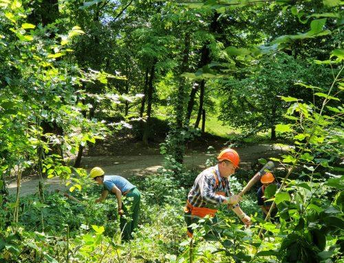 Njega mlade šume u parku Maksimir – obavijest